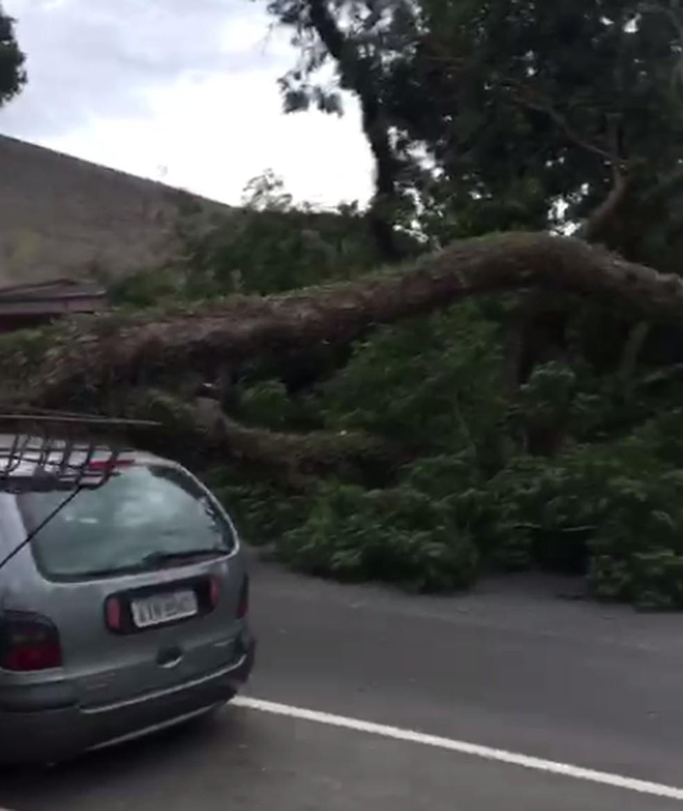 Árvore cai sobre carro e bloqueia rua no bairro Bacacheri — Foto: Reprodução/RPC