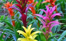 Flores tropicais: espécies de corte para conhecer
