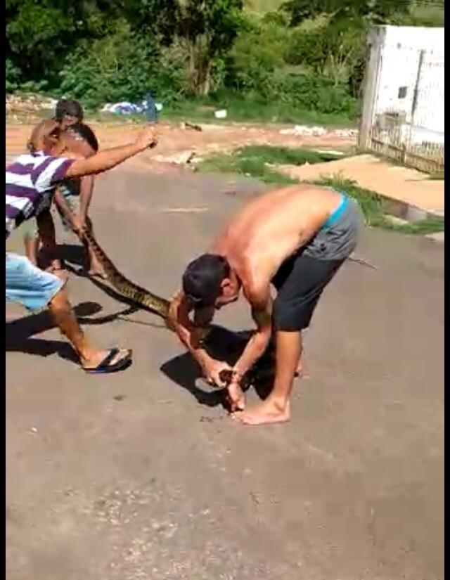 Suspeitos de matar sucuri têm passagens por roubo e tráfico de drogas, diz polícia - Notícias - Plantão Diário