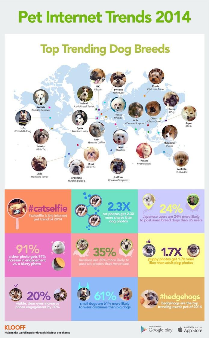 Pet-Internet-Trends-2014: o relatório da rede Kloof sobre os animais (Foto:Divulgação)