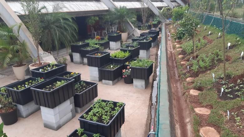 Ao todo, mais de 60 espécies serão cultivadas no local (Foto: Divulgação)
