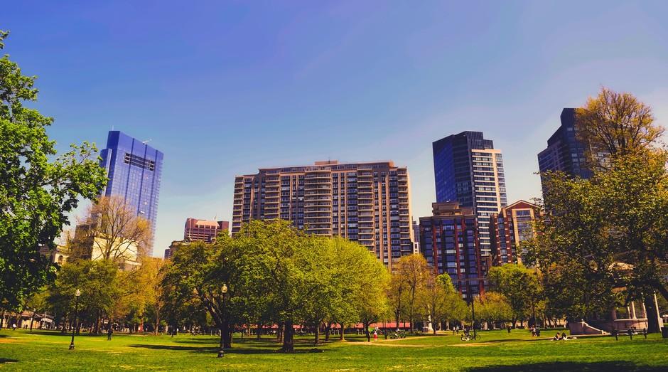 arvore, verde, cidade, prédio (Foto: Reprodução/Pexels)