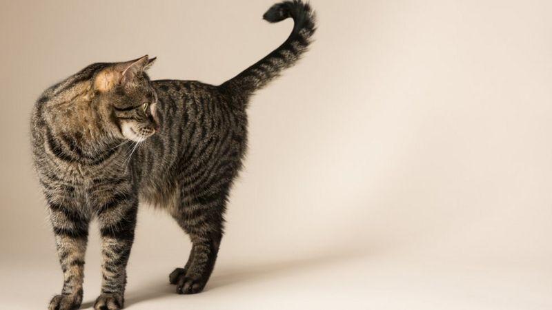 Polícia Civil investiga denúncias de maus-tratos contra gatos em Aracaju