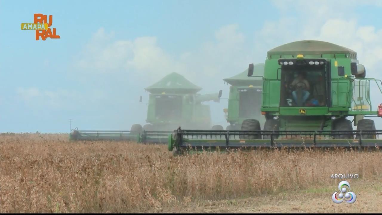 Impasse sobre liberação de terras derruba previsão de alta na produção de soja no Amapá