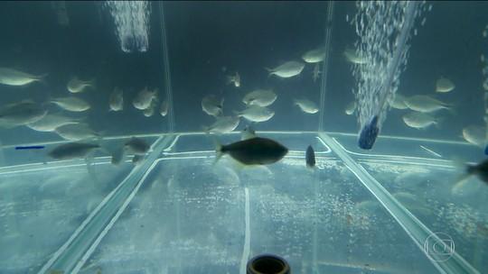 Poluição afeta vida aquática na Represa Billings, em SP
