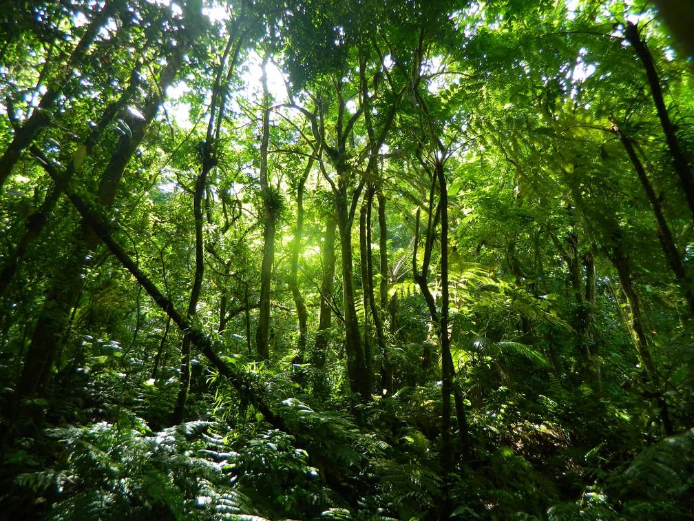 Floresta produz imensas quantidades de água para restante do país (Foto: Arquivo TG)