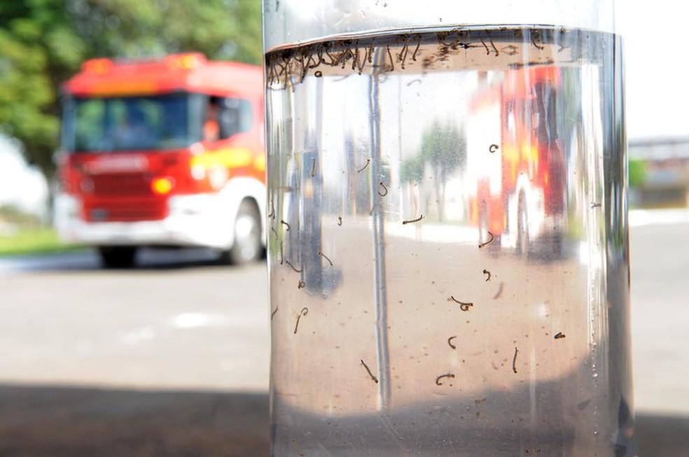 Dia D Contra a Dengue no DF, em imagem de arquivo — Foto: Gabriel Jabur/Agência Brasília