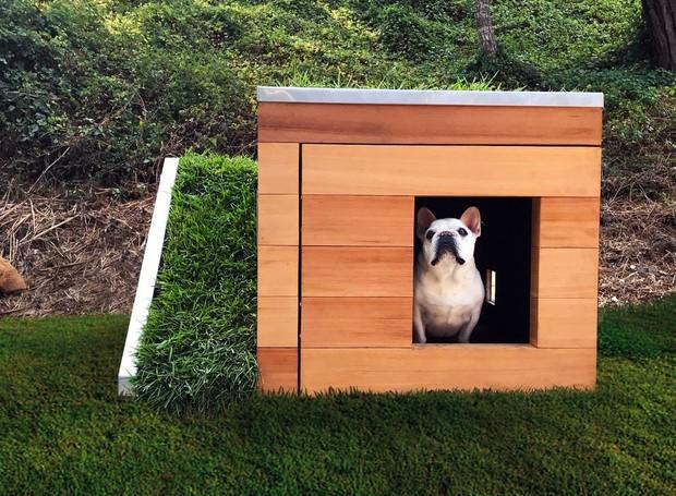 Cachorro dentro de casinha sustentável  (Foto: DesignBoom/Studio Schicketanz/Reprodução)