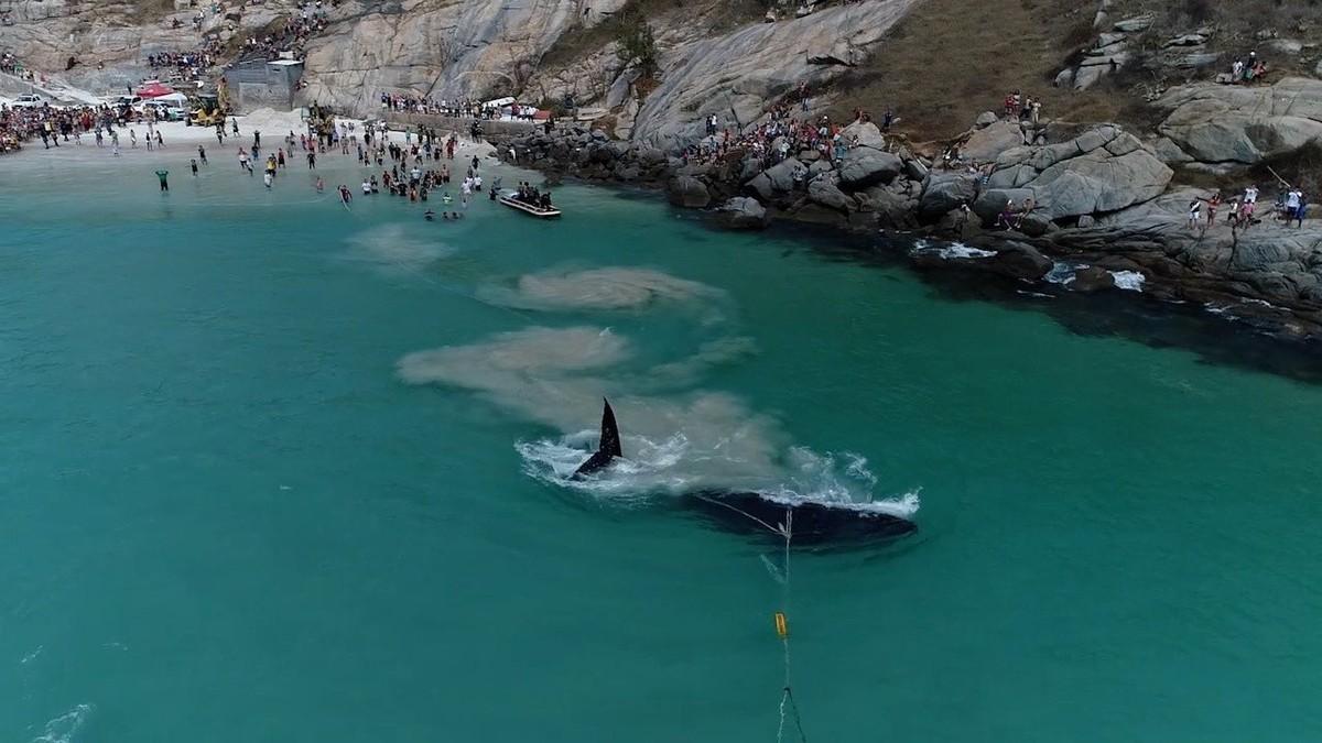 Corrente de solidariedade salva baleia encalhada em Arraial do Cabo, no RJ