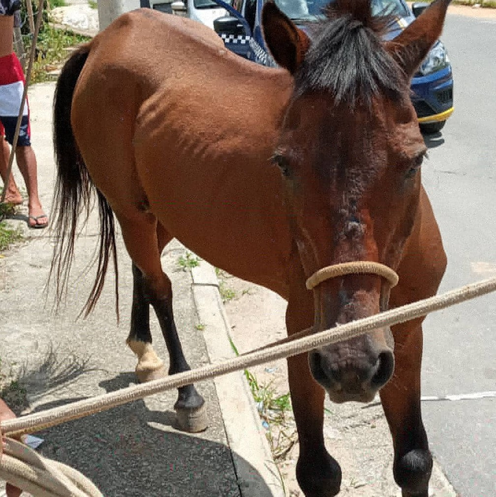A associação Brasil Sem Tração Animal protocolou uma ação popular contra a Prefeitura de Belo Horizonte — Foto: Arquivo Pessoal/Daniela Sousa
