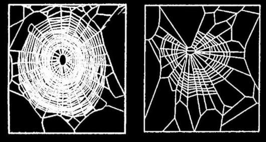aranha maconha O que acontece quando a Nasa faz experiências com drogas em aranhas