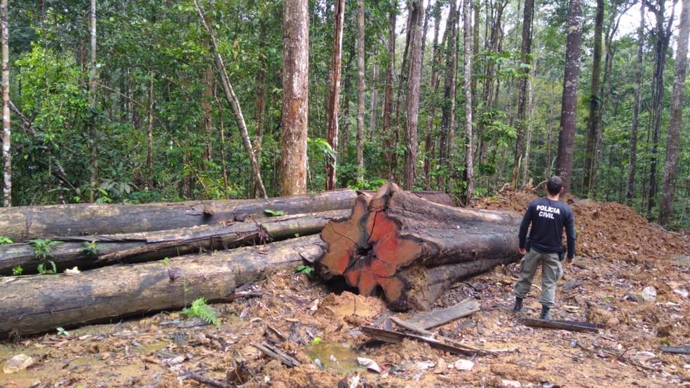 Chefe da Embrapa diz que Brasil é líder em preservação ambiental — Foto: Dema/Divulgação