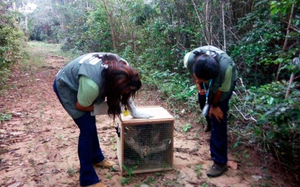 Animais foram achados em área de risco no entorno do aeroporto de Salvador (Foto: Divulgação)