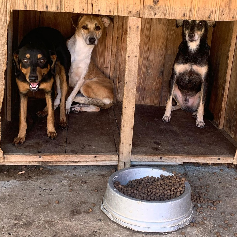 Protetores de animais de Rio Claro fazem campanha de adoção para cães que ficaram sozinhos após donos morrerem de Covid-19 — Foto: Giselle Pfeifer/Arquivo Pessoal