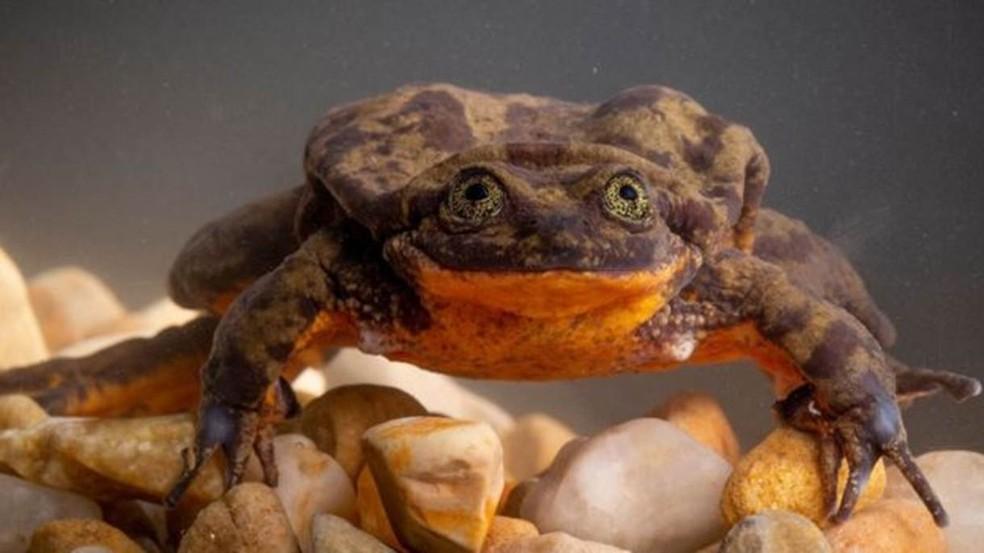 Romeu foi descrito por bióloga como sendo 'meio tímido e lento' — Foto: Robin Moore, Global Wildlife Conservation (via BBC)