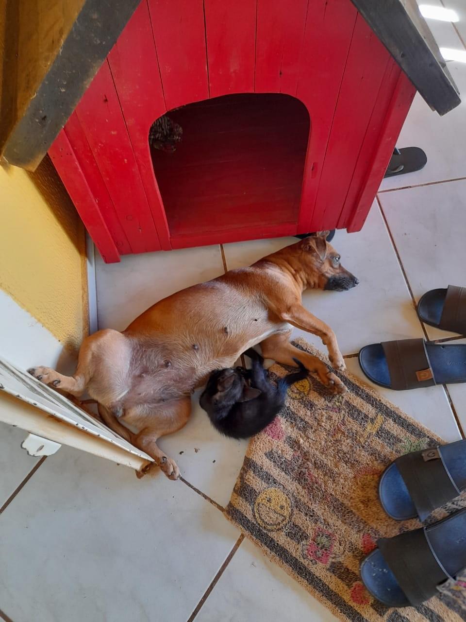 Cadela acolhe gata e tenta amamentá-la após outro felino da casa morrer atropelado