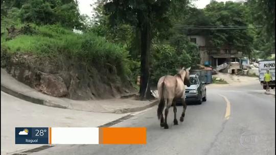 Cavalos andam soltos em rodovia de Niterói