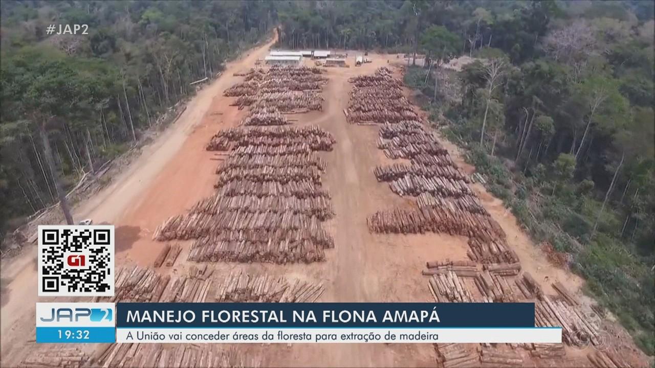 União abre edital para extração de madeira durante manejo na Floresta Nacional do AP