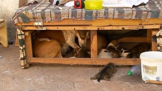 Casa pega fogo em Marília e bombeiros salvam casal de cães e oito filhotes