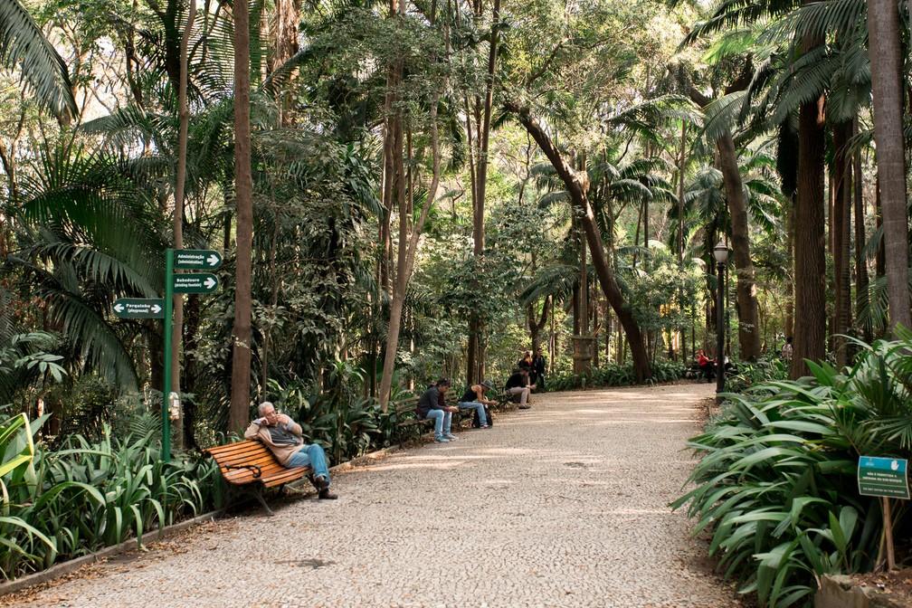 Parque Trianon, em São Paulo, tem 125 anos e preserva remanescente de Mata Atlântica — Foto: Marcelo Brandt/G1
