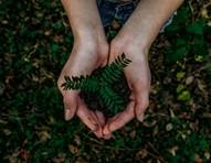4 aplicativos que plantam árvores em poucos cliques