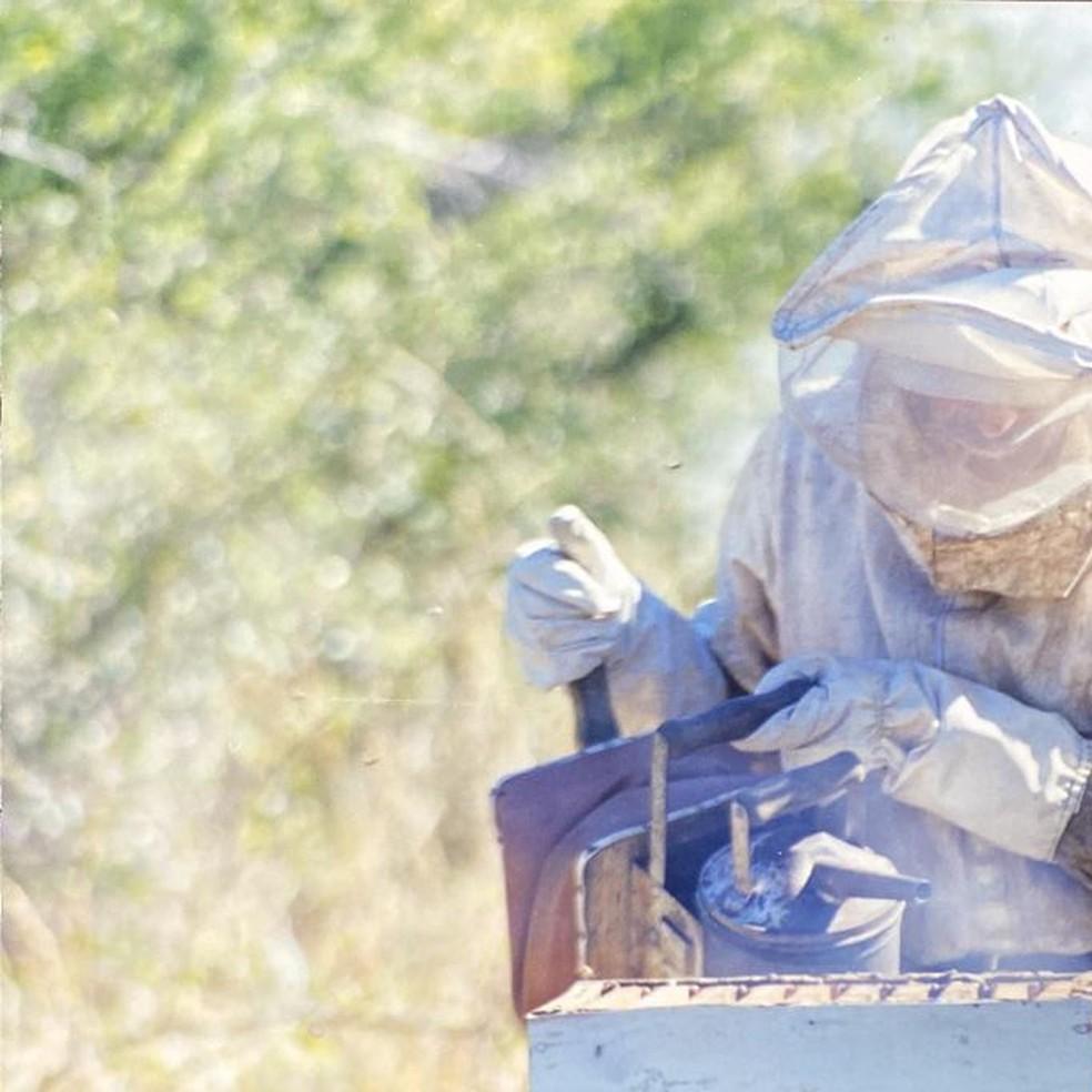 Apicultores registram aumento na produção de mel na pandemia — Foto: Cedida/Marcos Ferreira