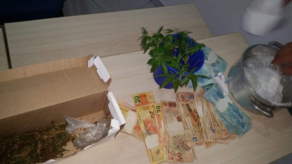 Homem é preso com plantação de maconha na casa onde morava em Princesa Isabel, PB