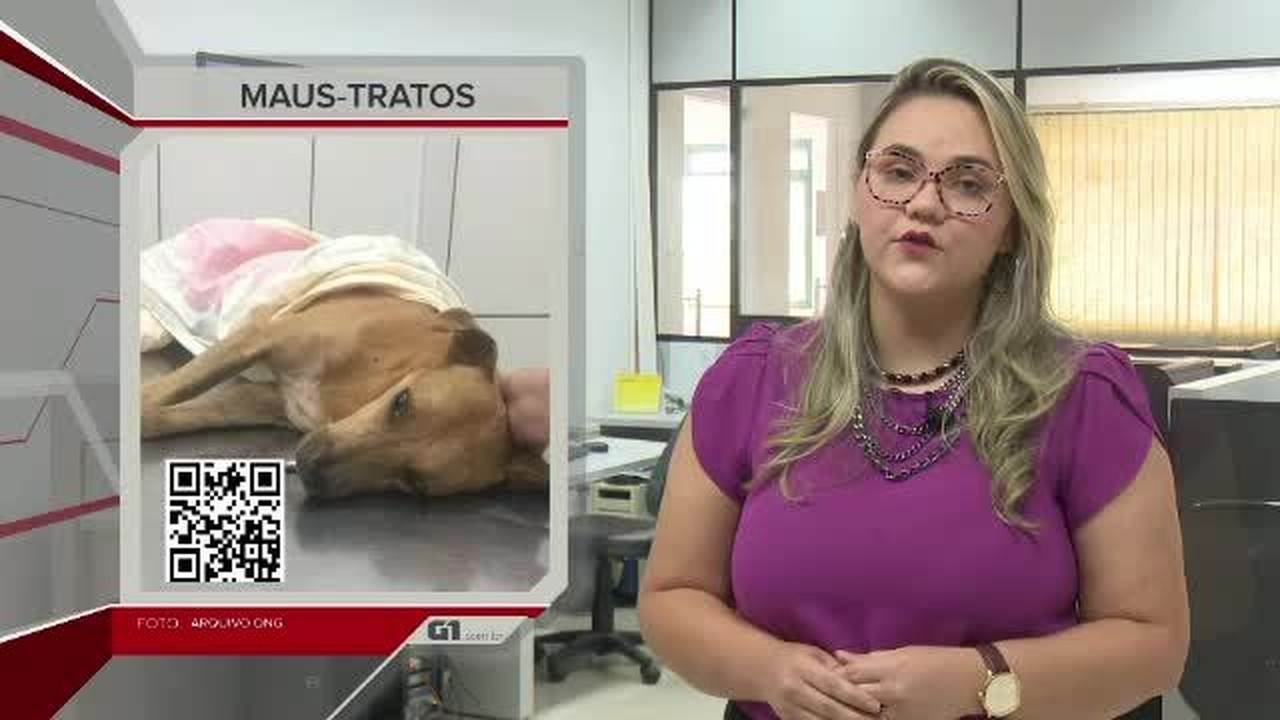 G1 em 1 minuto-AC: cachorro morre após ser resgatado com sinais de maus-tratos