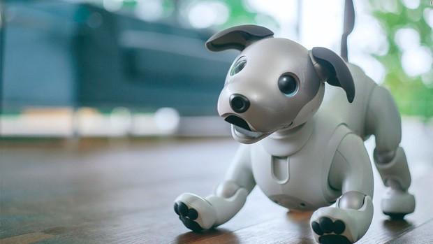 20 produtos para animais muito tecnológicos (Foto: Divulgação)