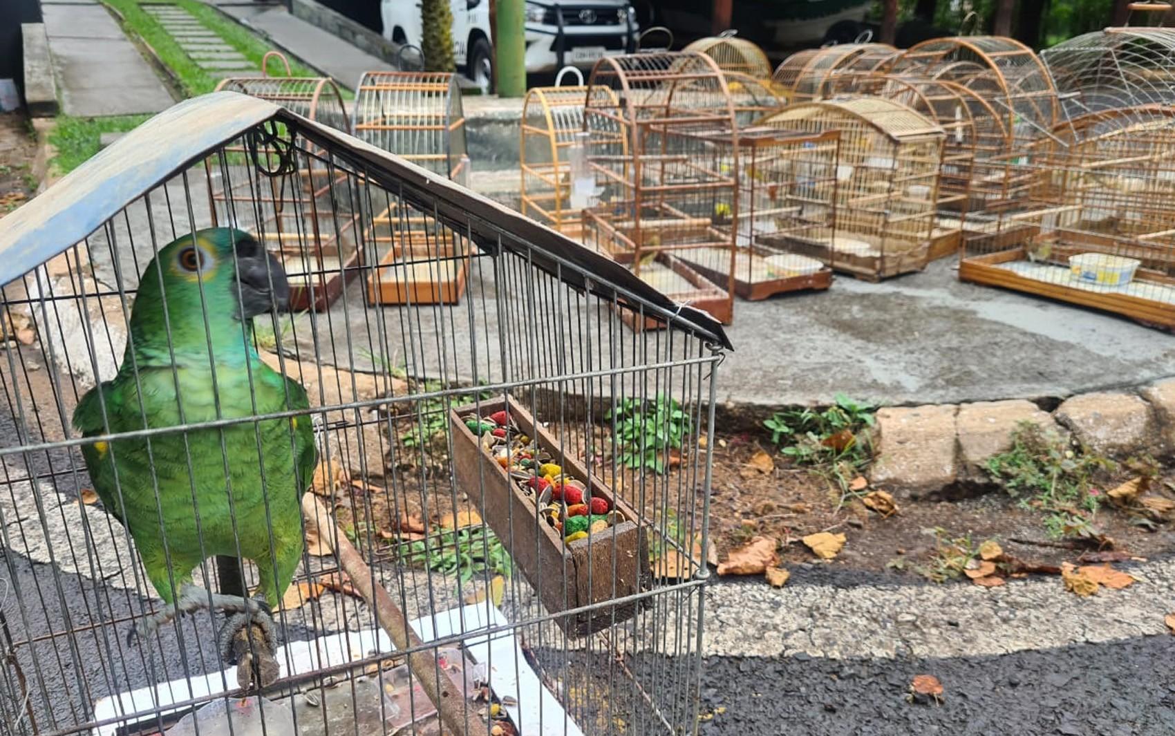 Homem é multado em R$ 74 mil por manter 74 aves silvestres em cativeiro em Franca, SP; vídeo