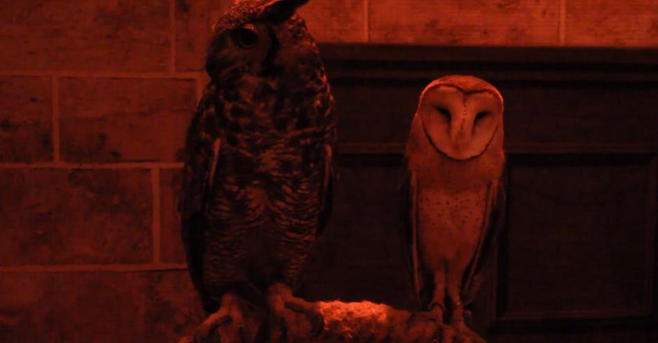 """Corujas da exposição """"Casa dos Bruxos"""" (Foto: Reprodução/YouTube)"""