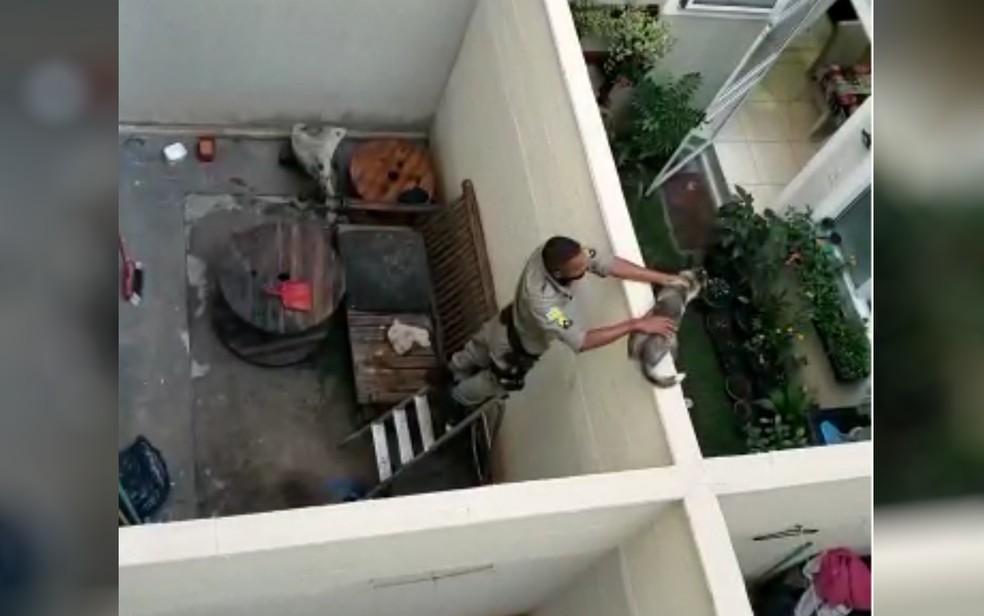 PMs pulam muro e resgatam filhote de husky que estava há 4 dias sem água e comida, em Goiânia — Foto: Reprodução/TV Anhanguera