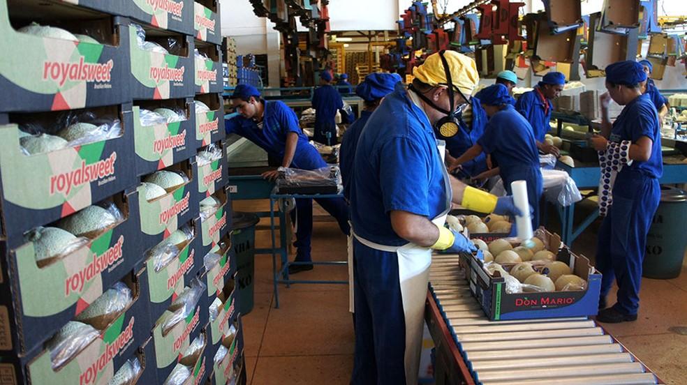 Melão produzido é um dos produtos potiguares líderes de exportação (arquivo) — Foto: Anderson Barbosa/G1