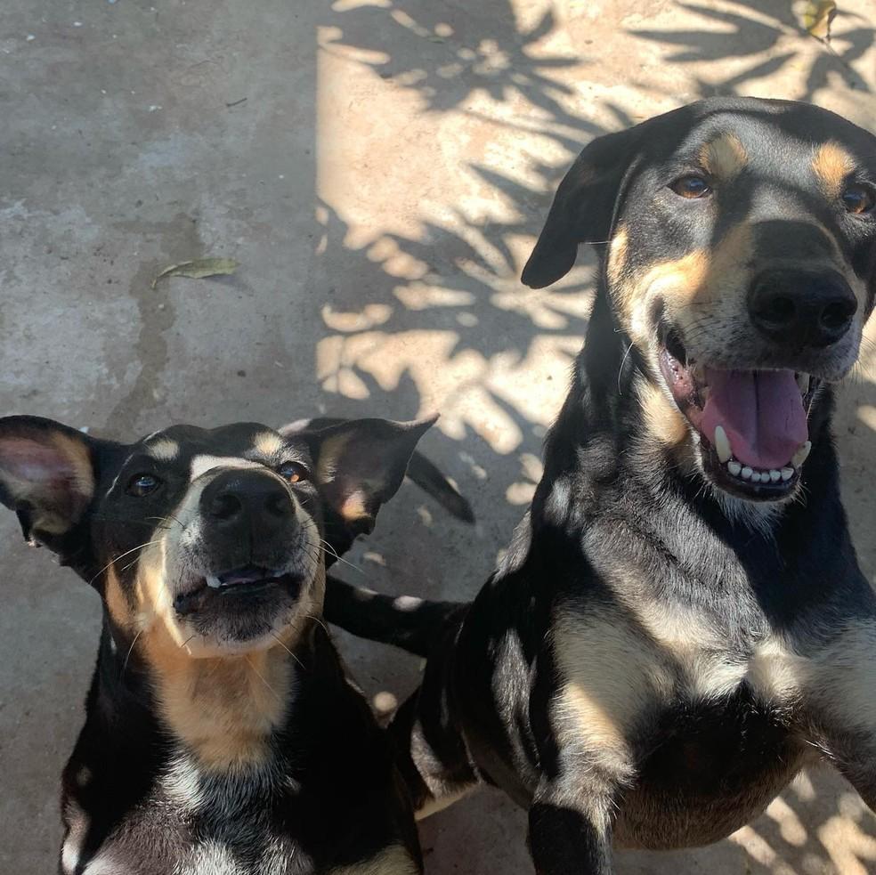 Protetores de animais de Rio Claro fazem campanha de adoção para cães, após donos morrerem de Covid — Foto: Giselle Pfeifer/Arquivo Pessoal