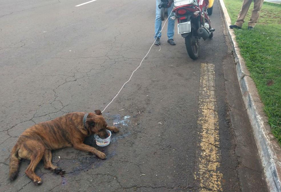 Segundo a polícia, o cachorro estava com as quatro patas lesionadas e sangrando.  (Foto: Polícia Militar/Divulgação)