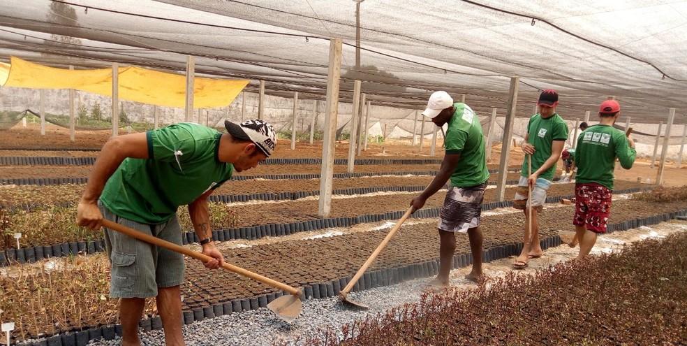 Viveiro terá capacidade para produzir 100 mil mudas (Foto: Fabrício Pittelkow/Arquivo Pessoal)