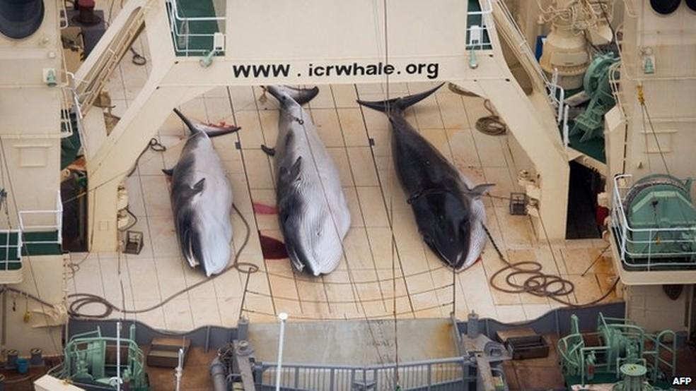 Ativistas acusam o projeto japonês de 'caça ilegal de baleias' (Foto: AFP)