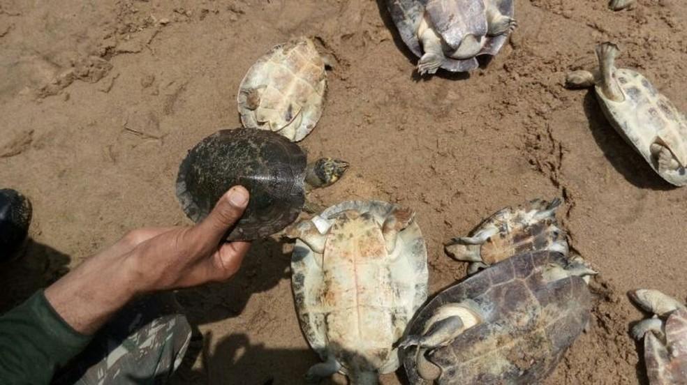 Alguns dos animais estavam desidratados e machucados, mas todos foram soltos no rio (Foto: Sema)