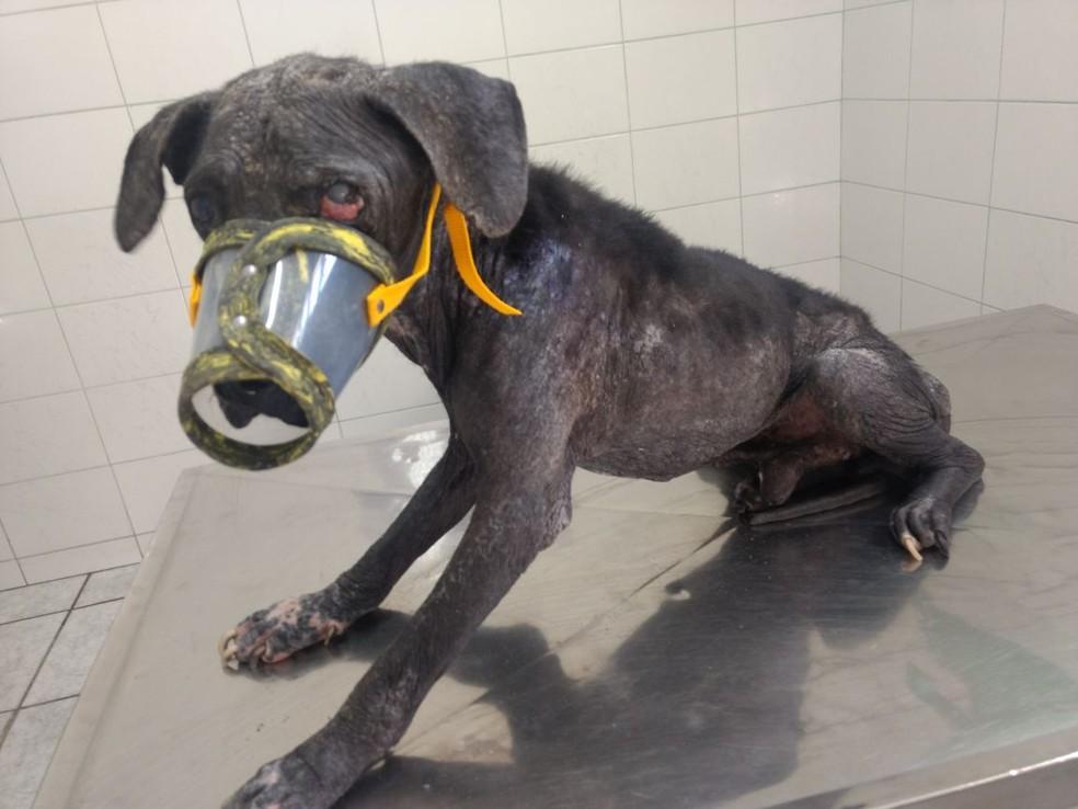 Nego já passou pelo veterinário e foi medicado, mas ainda precisa de um lar (Foto: Simone Silva/Arquivo Pessoal)
