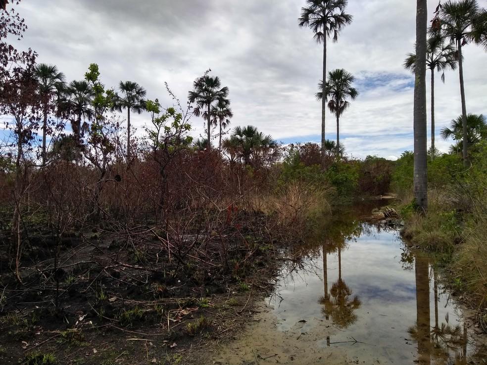 Vereda atingida por queimada na região de Pandeiros — Foto: Rúbia Fonseca / Arquivo Pessoal