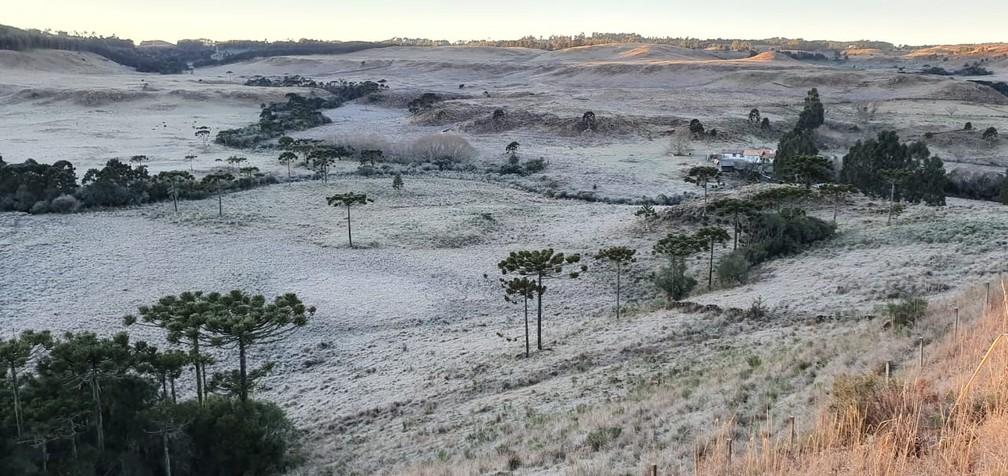 Vegetação amanheceu coberta pela geada — Foto: Mycchel Legnaghi