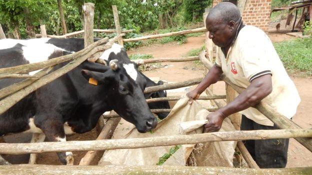 Abiasali Nsereko, 68, passa oito horas por dia trabalhando no campo e diz que sua saúde está ótima (Foto: Divulgação BBC)