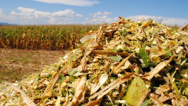 agricultura_pastagem_silagem (Foto: Robispierre Giuliani/Ed. Globo)