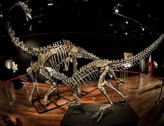 Dinossauros exibidos no espaço Drouot, em Paris, arrematados em abril por € 1,4 milhão cada um, o dobro do preço inicial estimado (Foto: AFP PHOTO/STEPHANE DE SAKUTIN)