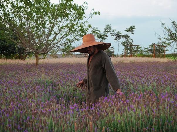 A primavera nos campos de flores de Holambra (Foto: Jorge Lepesteur)