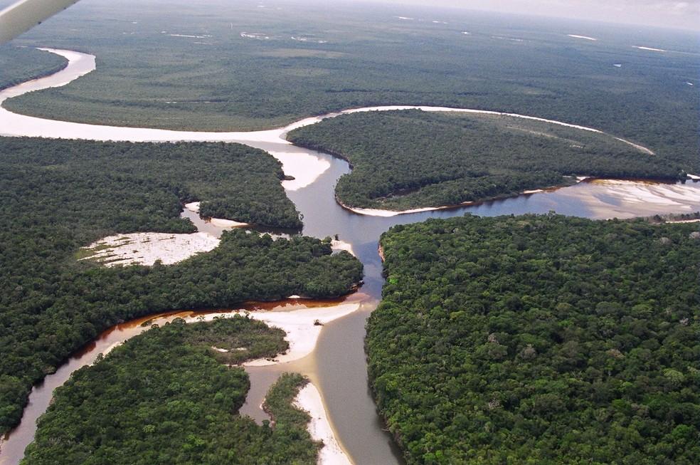 Brasil é conhecido por ser casa de diversos tipos de vegetação (Foto: Arquivo TG)