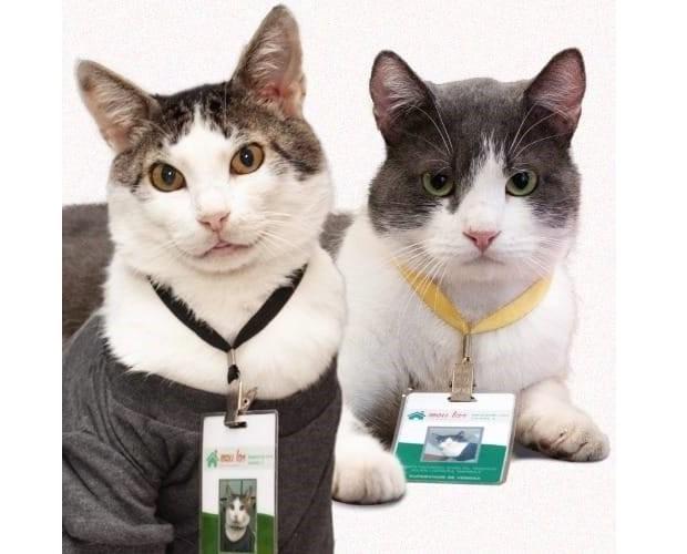 Athos e Renato, da loja Meu Lar Enxovais (Foto: Reprodução/Facebook)