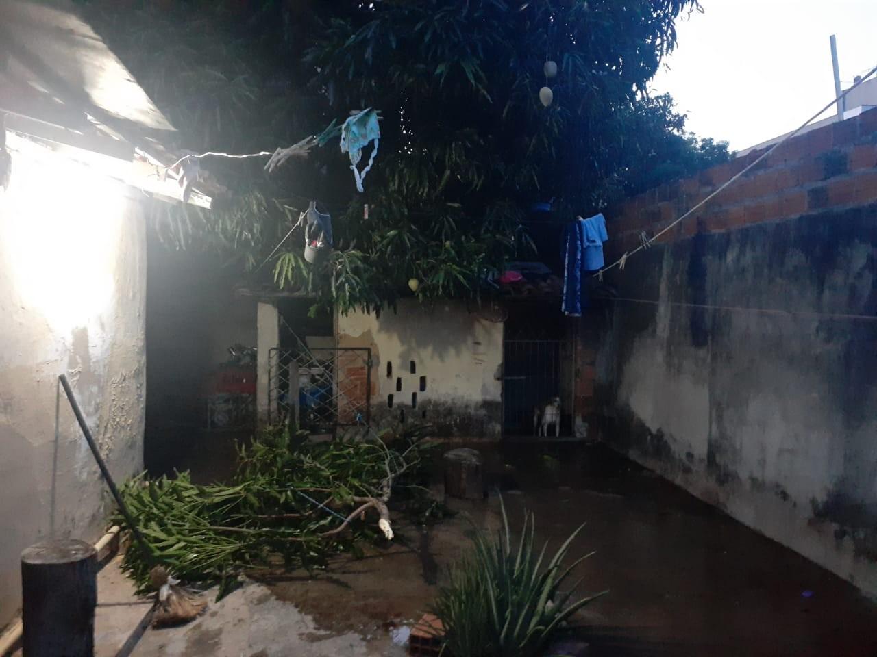 Homem morre após cair de árvore em quintal de residência na Zona Leste de Teresina