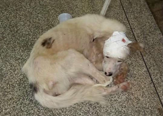 'Não é a realidade', diz polícia sobre 32 casos de maus-tratos contra animais em 2019 no AP - Notícias - Plantão Diário