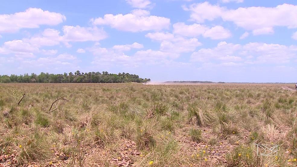 Ação teve como objetivo proteger os campos alagados em Anajatuba (Foto: Reprodução/TV Mirante)